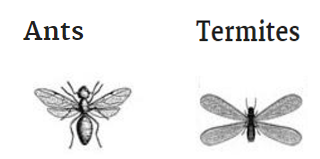 Comparing Ants with Termites