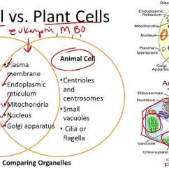 Plant Cell Animal Venn Diagram Interposing Relay Panel Wiring Concepts Review - Unit Iii: Section 4-3 & 4-4
