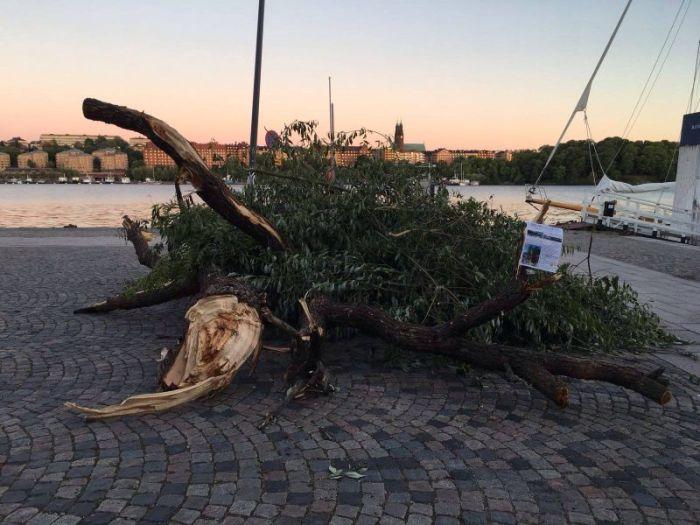 rålambshovsparken_trädfällning_protester_stockholm