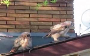 Uno de los búhos se va tras echarle la cagada al otro que le mira sorprendido. (Foto: Captura del vídeo)