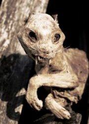 Estos son los restos momificados de un felino. (Foto: cortesía - JM Noticias) - PULSAR PARA AMPLIAR -
