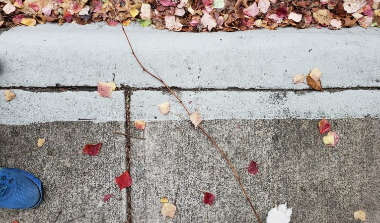 Fall leaves on sidewalk with sneaker and paw