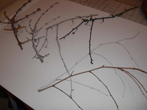twigs-paper-drawing