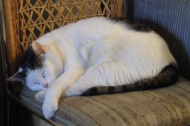 Mon chat 009-R