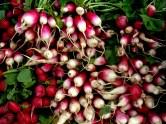 New radishes
