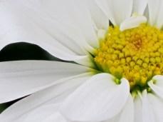 flowers 029