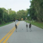 Sarasota wildlife near Logger Lodge