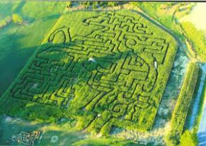 2014 corn maze at Back at the Farm in Harrisonburg.