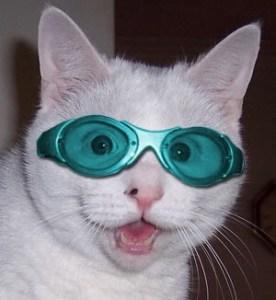 sunglasscat2
