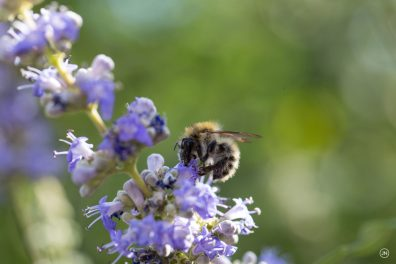 As busy as a bee can be