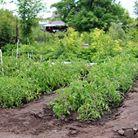 Création, entretien de jardin potager | Jo votre jardinier paysagiste à Chevillon, Charny Orée de Puisaye, Yonne (89) | www.jo-votre-jardinier-paysagiste.fr