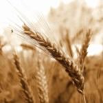 choisir sa barre de céréales