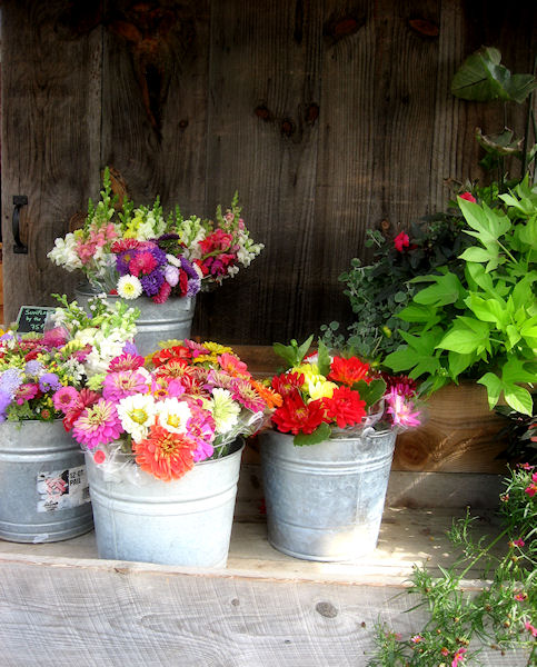 Photo of buckets of flowers at a Vermont farm stand taken by Joana Miranda