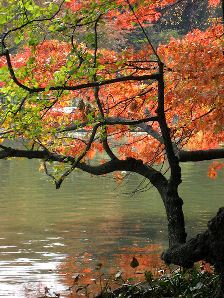 Photo of colorful trees by the lagoon in Central Park taken by Joana Miranda