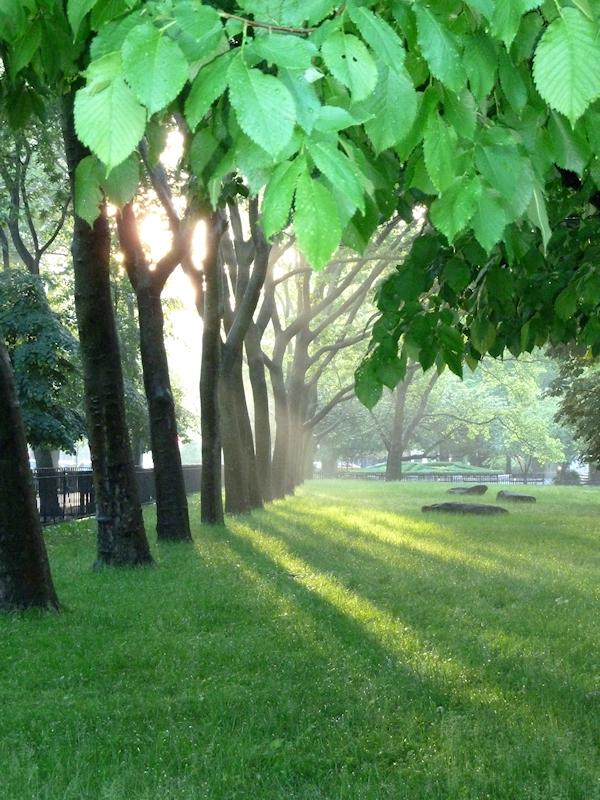 Photo of sunlight streaming through trees in a park, taken by Joana Miranda