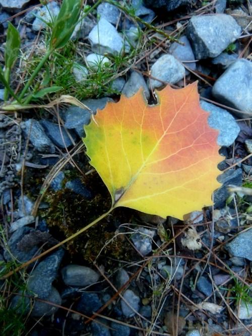 first autumn leaf