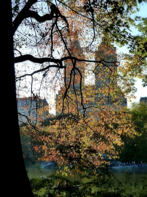 Central Park West through the trees