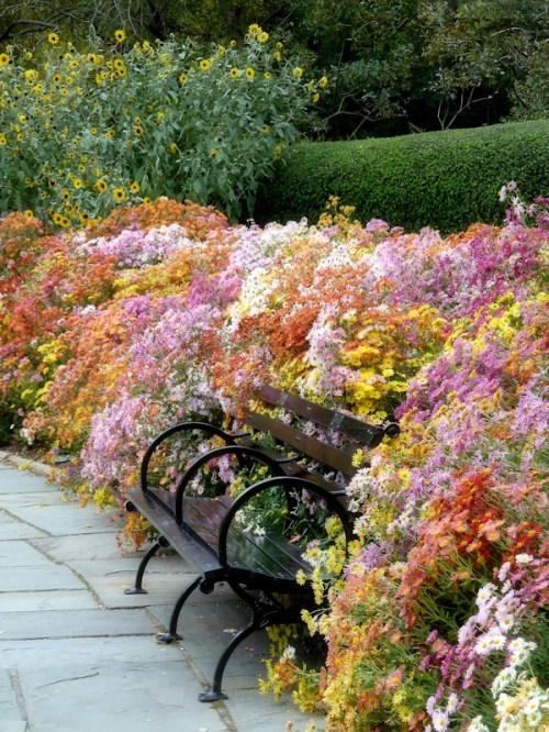 Conservatory garden and bench