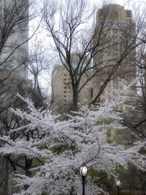 Sprin 2016 in Central Park