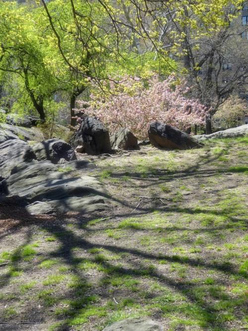 spring 2016 in Central Park