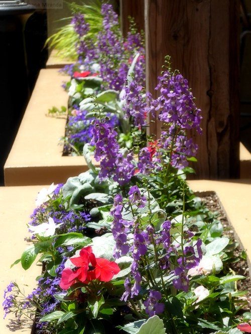 pretty summer flower boxes