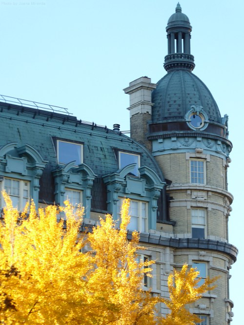 blue-and-yellows-on-a-crisp-fall-day-in-nyc