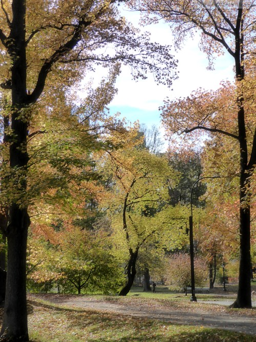 fall-in-central-park