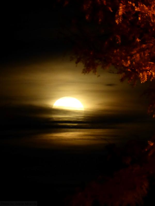Beaver moon over Newark, photo by Joana Miranda