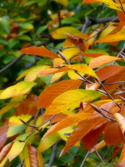 Photo of autumn leaves in Central Park, taken by Joana Miranda