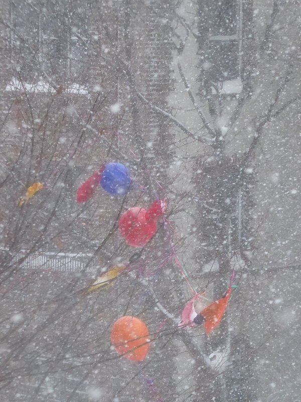 Photo of balloons caught in a tree during a snowstorm, taken by Joana Miranda
