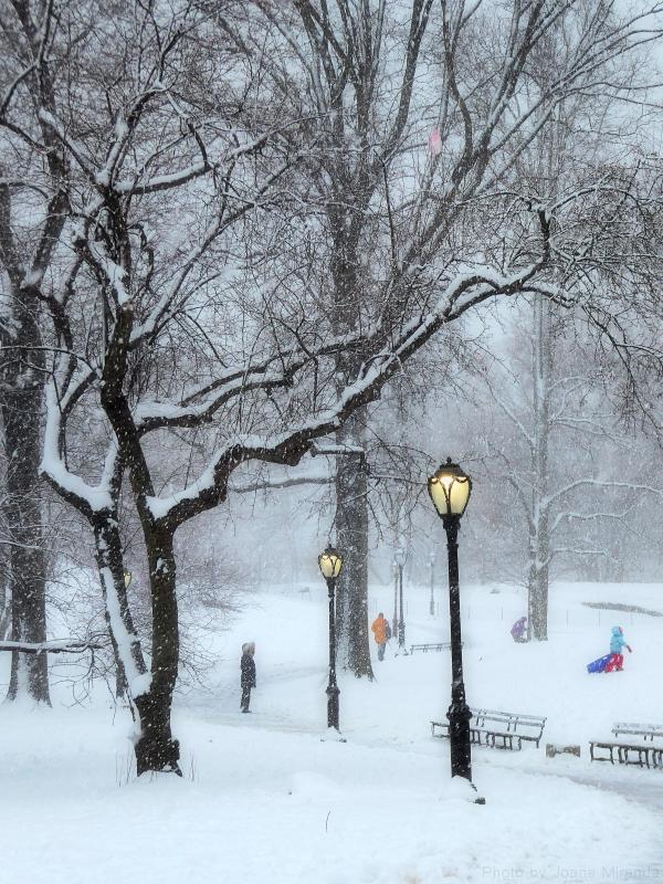 Frivolity in the snow in Central Park