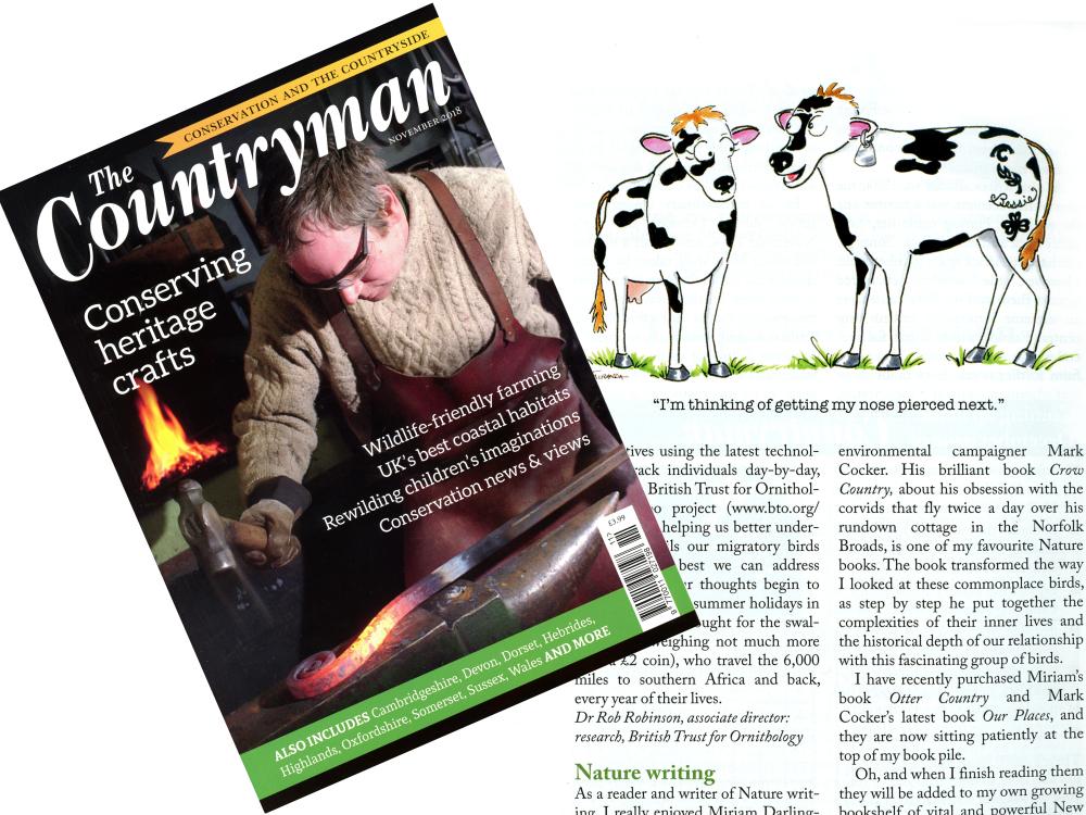 Published Work - Two Cows cartoon by Joana Miranda for The Countryman Magazine
