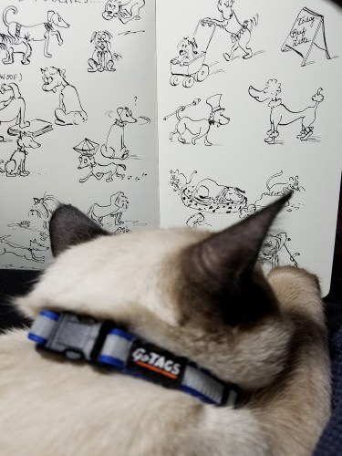 Photo of our Seal Point Toybob kitten scrutinizing my Moleskine sketchbook.