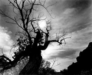 054C03 Requiem for a Dead Tree, UT 2000