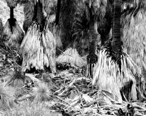 1995003003 Fan Palms, CA 1995