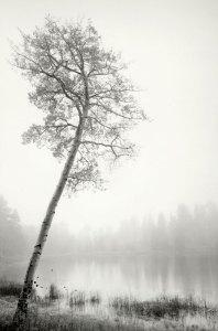 1998041B07 Posey Lake, UT 1998