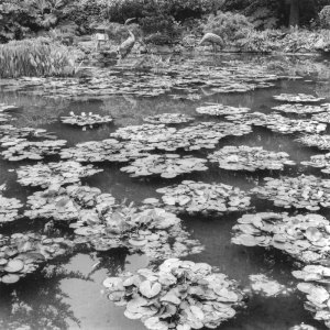 2002032001 Study in Square-Lilypads 2002