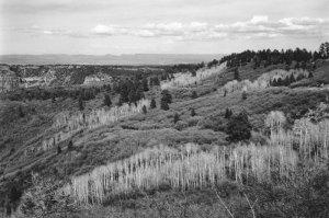 201301901 Aspens, Boulder, UT 2013
