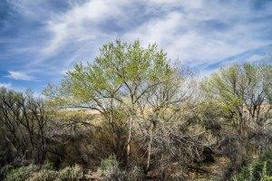 20170193DC Butler Wash Trees, UT 2017