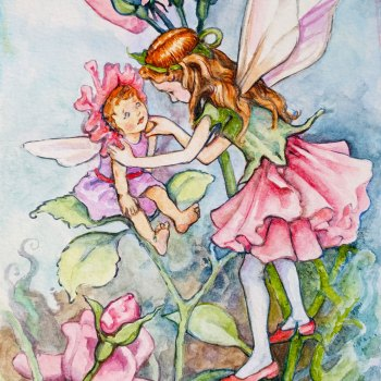 Pink Rose Fairies