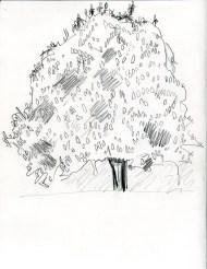 Horse chestnut, 2000