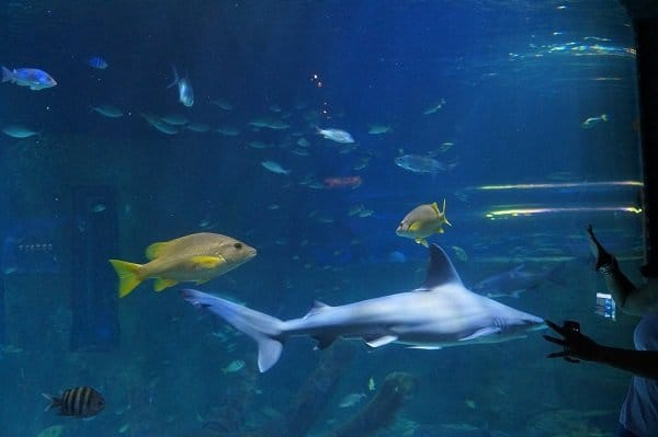 Sharks Sea Life
