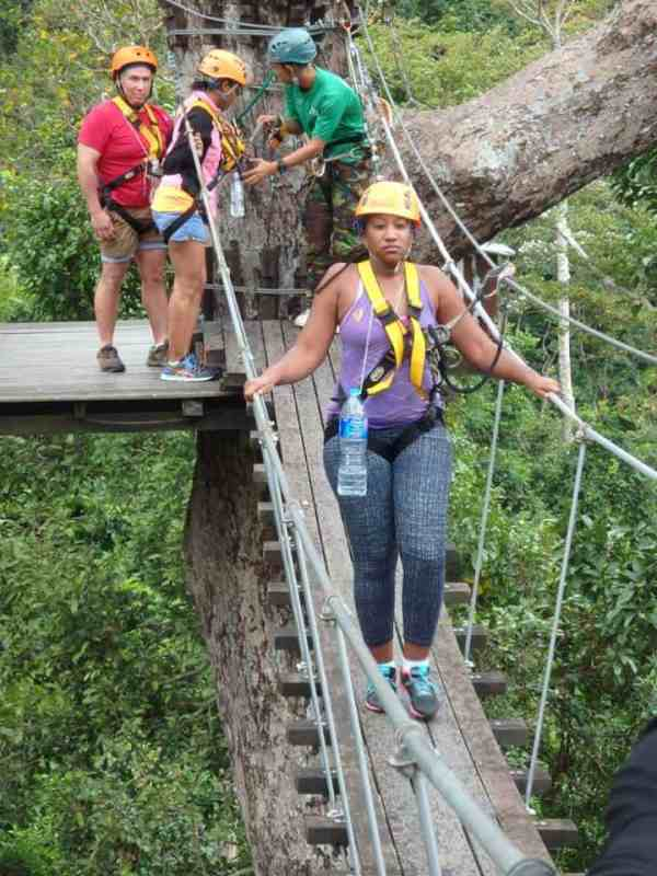 Walking across the sky bridge - flight of the gibbon