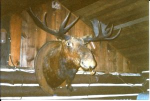The stories of how the moose got stuck there fasinated the grandkids