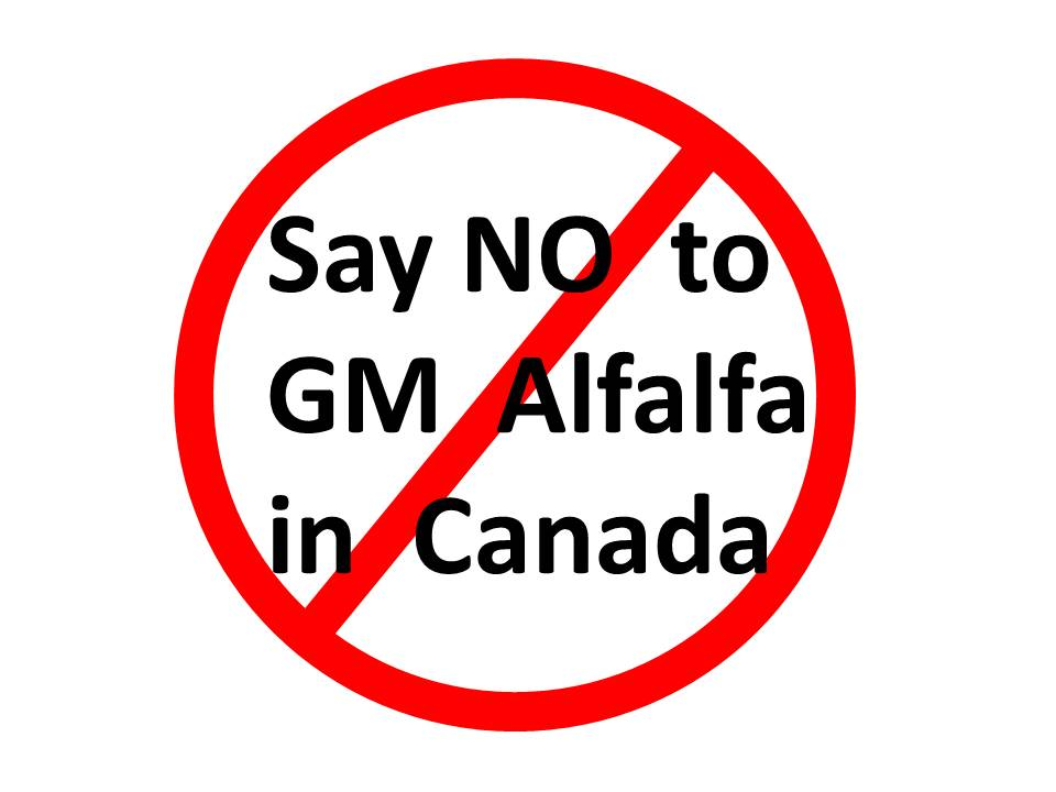 Say NO To GM Alfalfa In Canada