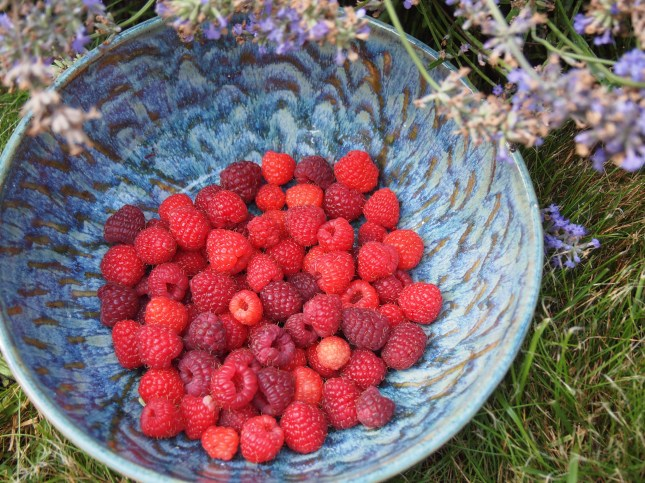 Red Raspberries in a beautiful bowl made by my sister Jacquie Blondin - Image copyright Jo-Ann Blondin