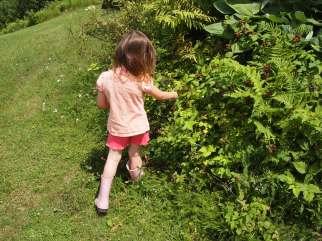 My niece picking her first black raspberries. Copyright Jo-Ann Blondin