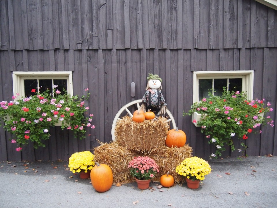 Pumpkins in a stunning Fall decorating display - Copyright Jo-Ann Blondin