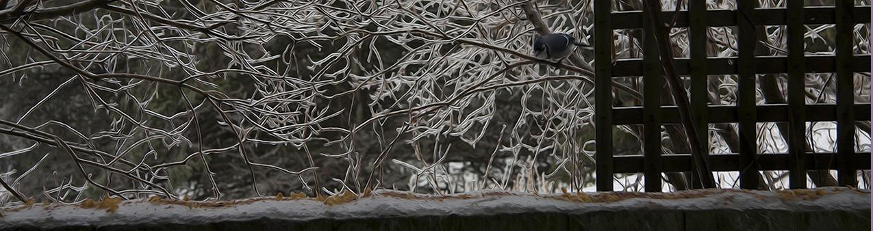Blue Jay eying bird seed