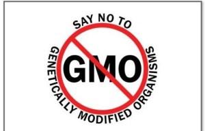 Say No to GMO yard sign